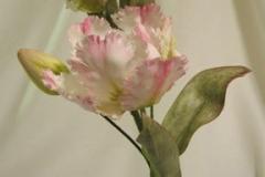 Parrot_tulip_3